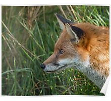 Red Fox Profile Poster