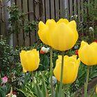 Garden Tulips by Janone