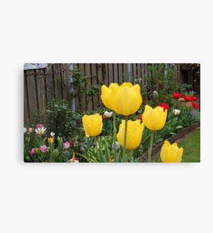 Garden Tulips Canvas Print