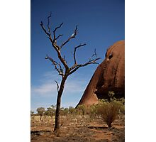 skeleton tree by uluru Photographic Print