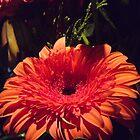 Red flower by John Witte