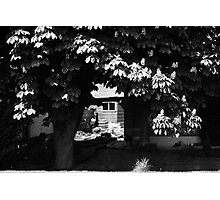 Through The Chesnut Trees Photographic Print