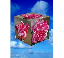 Rose Cube Photographic Print