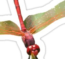 Closeup of Red Skimmer or Firecracker Dragonfly Isolated Sticker