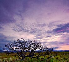 Gnarled, Withered and Lonely by Jase036