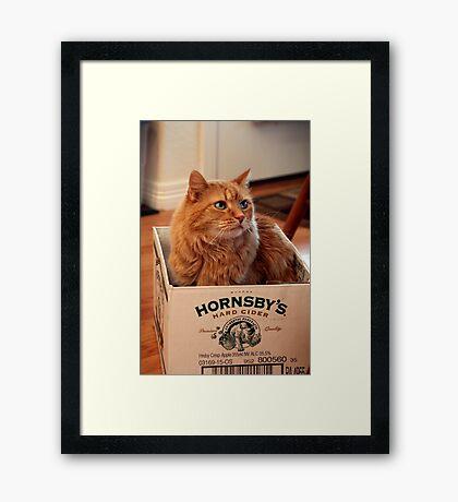 Cat in the Box Framed Print