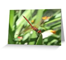 Red Skimmer or Firecracker Dragonfly Greeting Card