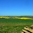 Fields of Gold and Green- Abbotsbury Dorset UK by lynn carter