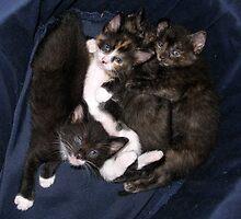 Cutie pile up by Lesley Ortiz