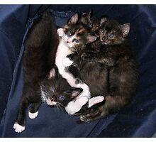 Cutie pile up Photographic Print