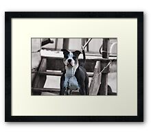 Selectively Cute Framed Print