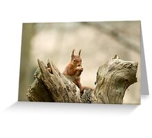 Red Squirrel with Hazelnut Greeting Card