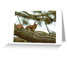 Red Squirrel in Tree Greeting Card