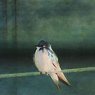 Tree Swallow by KathleenRinker