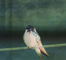 Tree Swallow by KathleenRinker