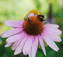 Echinacea Purpurea with Bees 2 by jojobob