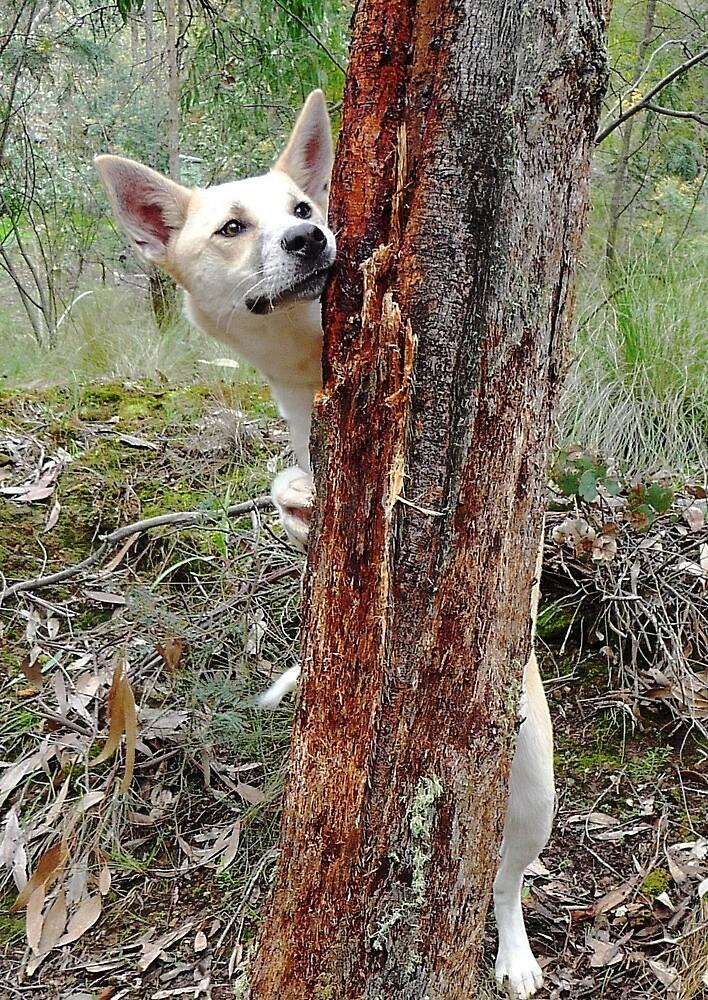 Forest Stalker! by Meg Hart