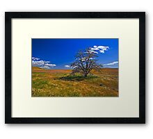 Tree Alone on a Hill Framed Print