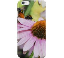 Echinacea Purpurea with Bees 6 iPhone Case/Skin