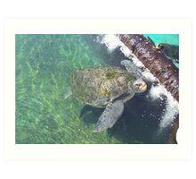 Turtles Art Print