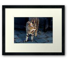 The Cat Next Door Framed Print