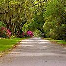 Magnolia Plantation Driveway by Photography by TJ Baccari