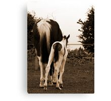 Horsey bum :) Canvas Print