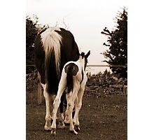 Horsey bum :) Photographic Print
