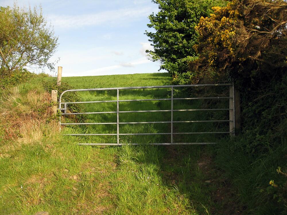 Irish field in springtime by John Quinn