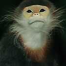 Red Shanked Douc Langur by TRussotto