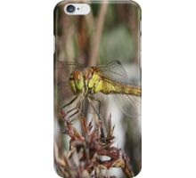 Brown Dragonfly On Husks With Garden Background iPhone Case/Skin