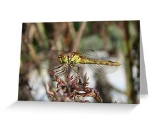 Brown Dragonfly On Husks With Garden Background Greeting Card