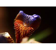 Natures Dragon Photographic Print