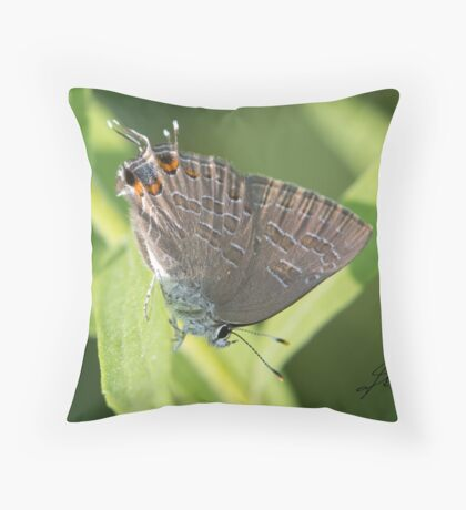 Striped Hairstreak Butterfly IMG_2407 Throw Pillow