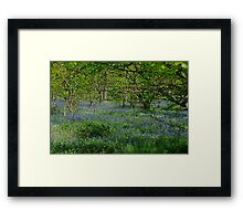 Todays Outing.  no3.  To The Woods!!! Framed Print
