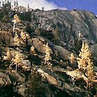 Donner Trees by Larry Darnell