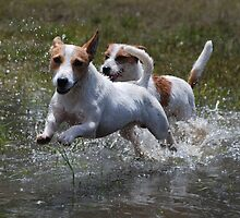 """""""Catch Me if You Can"""" by Emma Hardcastle"""