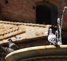 Pigeon on Water Fountain by jojobob