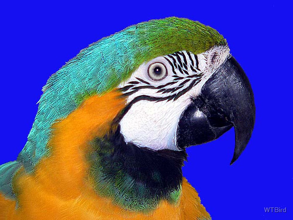 Polly Profile by WTBird
