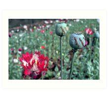 Opium Art Print