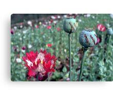 Opium Canvas Print