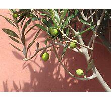 Greek olives Photographic Print