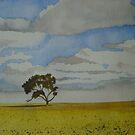 Canola Field by Chante