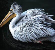Pelican Perfection by Dawn B Davies-McIninch