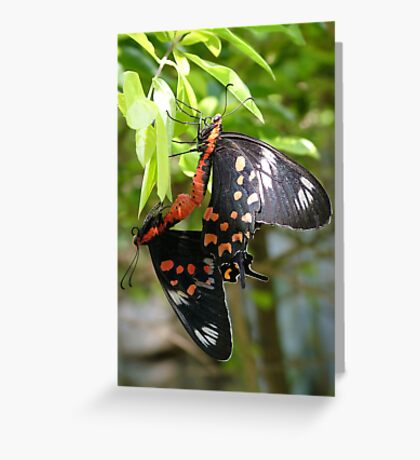 Butterfly mating in the garden Greeting Card