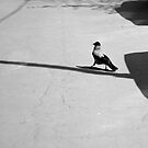 "City Life - ""Crow's Walk"" by Denis Molodkin"