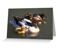 Duck with Ducklings Greeting Card