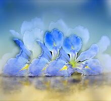 Water Iris Elan by Carmen Holly