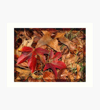 Autumn colours 1 Art Print
