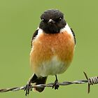 Stonechat - III by Peter Wiggerman